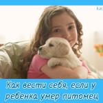 Как вести себя, если у ребенка умер питомец